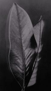 Savina_Cosimo-La_danza_delle_foglie-3