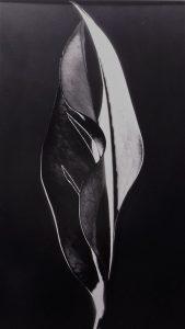 Savina_Cosimo-La_danza_delle_foglie-5