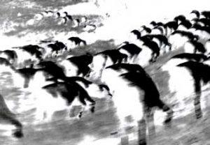 pecore1