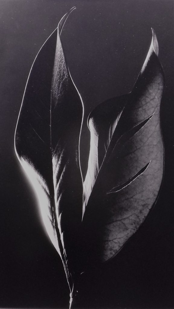 Cosimo Savina. La danza delle foglie