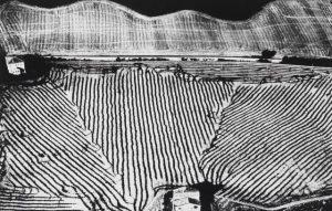 Giacomelli Mario - Presa di coscienza sulla natura - Senigallia - 1986